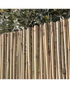 Arella canna passante recinzione coperture divisori ombreggiante varie misure